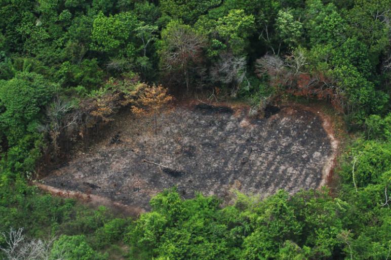 Desmatamento na Amazônia Legal: as seguradoras estão de olho. (Foto: Cristiano Martins/ Ag. Pará)